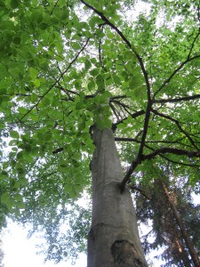 strom lesni mysl