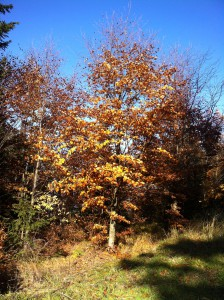 podzim strom