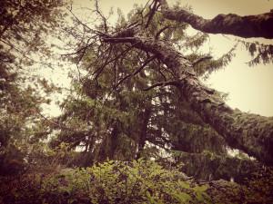 Lesní mysl podzim