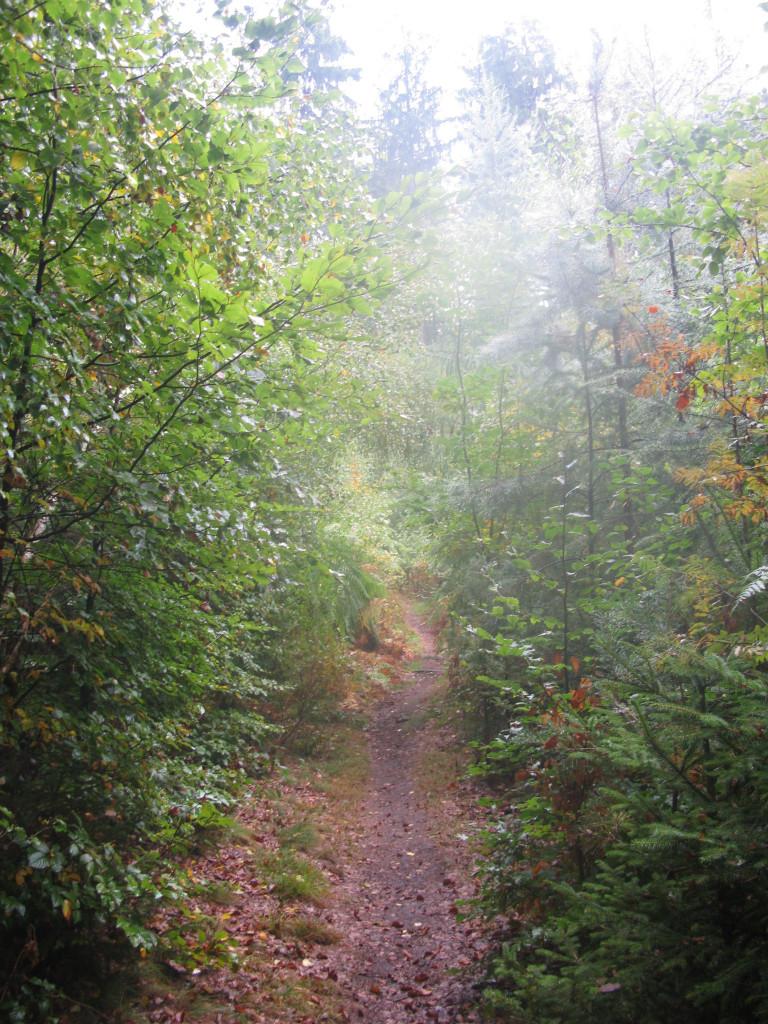 Lesní terapie